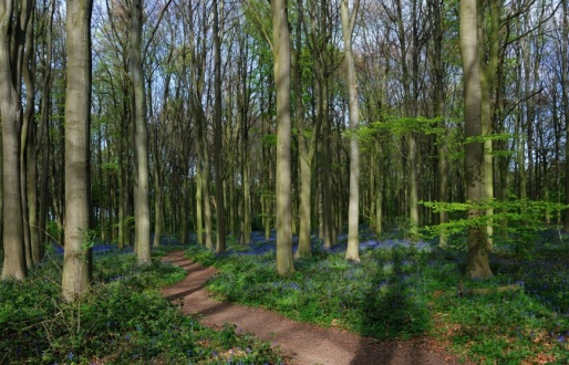 Melton Wood Country Park