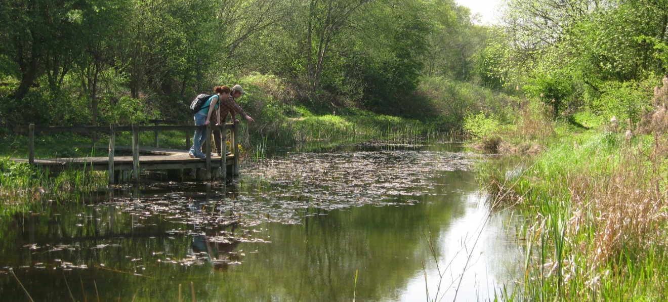 Pond Dipping at Doncaster's Potteric Carr