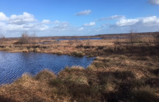 Thorne and Hatfield Moors
