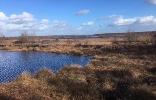 Thorne and Hatfield Moors
