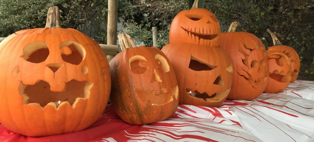 Halloween Torchlight Fun at Boston Park Farm